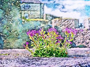 sterling castle flowers, stirling scotland