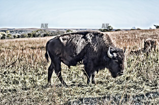 """buffalo #1"" kansas"