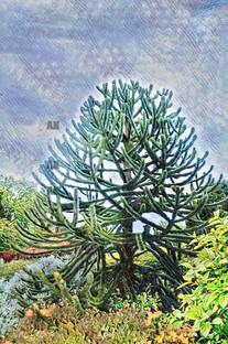 monkey puzzle tree watercolor, york england
