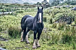 irish valley horse 2