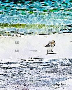 little bird on the beach