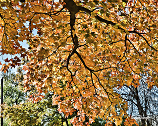 fall leaves (1)