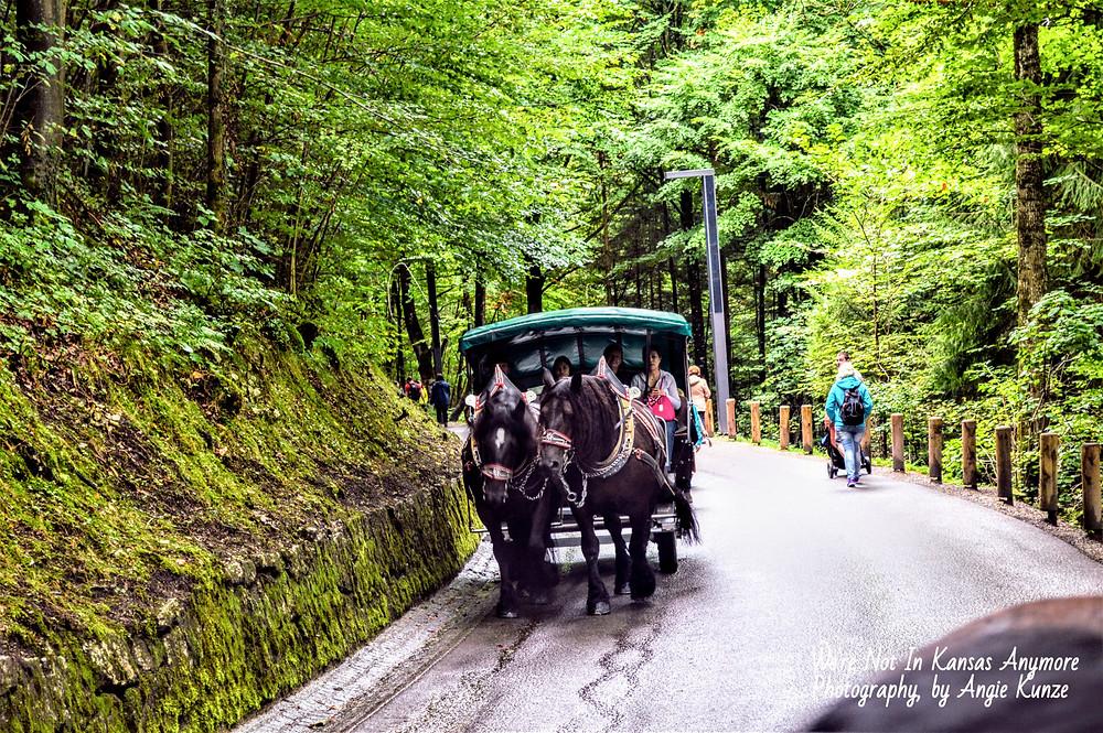 carriage ride, neuschwanstein, bavaria germany