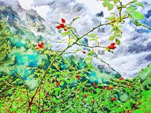 swiss mountain berries, ebenalp switzerland