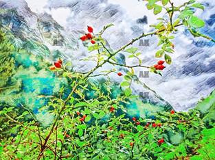 swiss mountain berries