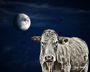 cow with moon