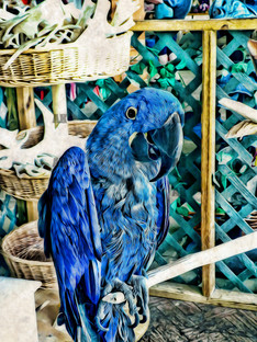 """""""blue parrot"""" graphic style"""