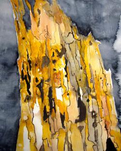 Stump of a tree | Lahokanto