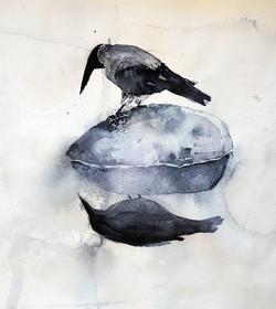 Crow | Varis