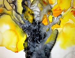 Old oaktree | Vanha tammi
