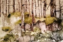 Stony Forest 1 | Pyhtään metsä 1