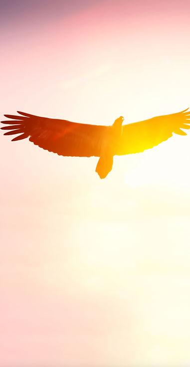 eagle02_118162808_l.jpg