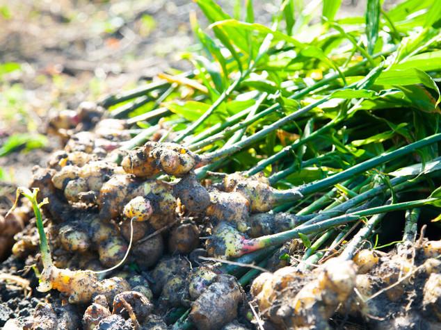 カフェボヌール(bonheur company)の田んぼと畑。お米と野菜を栽培