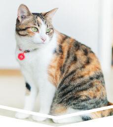 大切なペット、愛犬、愛猫を守る水引の御守りをカフェボヌールが手作りで制作。