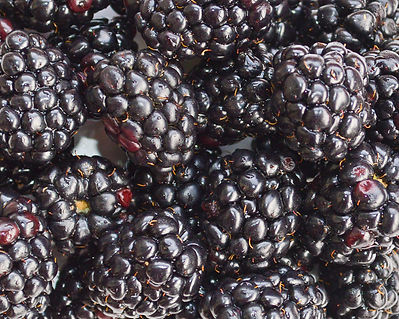 Photo of blackberries by Yvette Smith