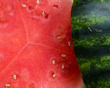 Photo of watermelon by Yvette Smith
