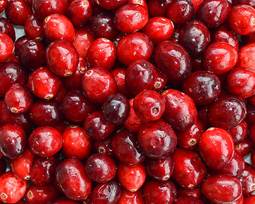 Photo of cranberries by Yvette Smith