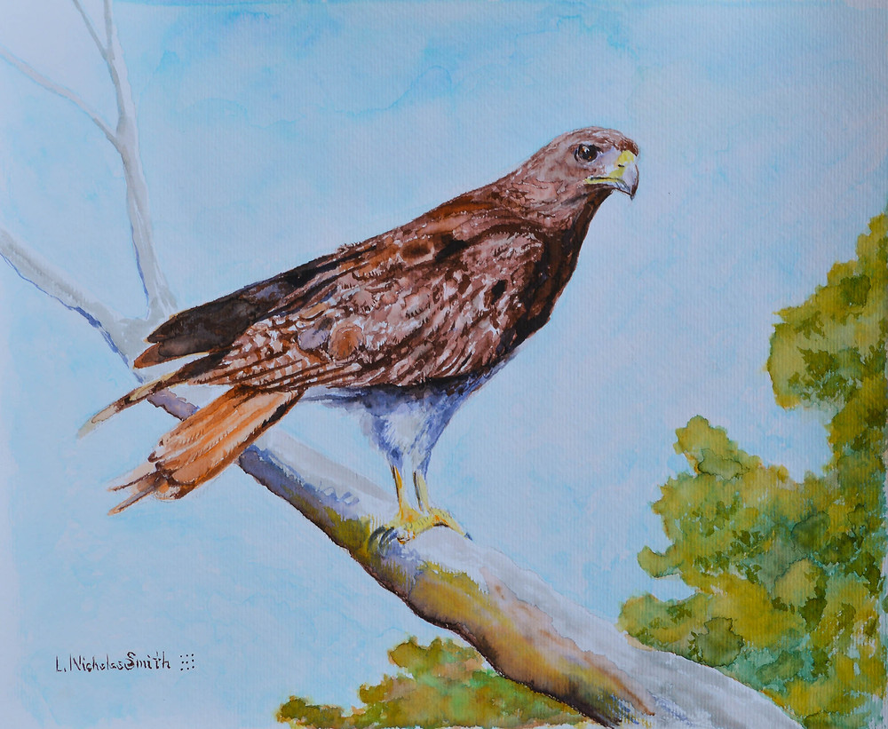 SC-35, Red Tailed Hawk watercolor painting by L. Nicholas Smith