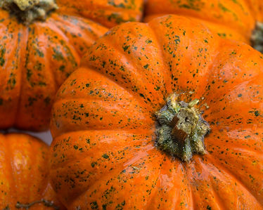 Photo of Pumpkins by Yvette Smith