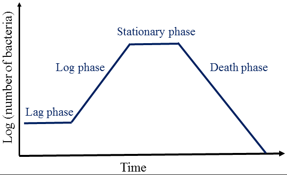 bacterial death curve
