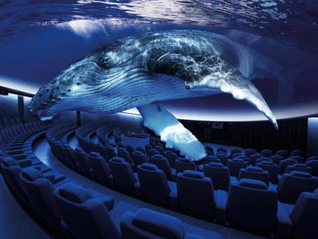 Virtuelles Aquarium - die neue Attraktion auf Mallorca