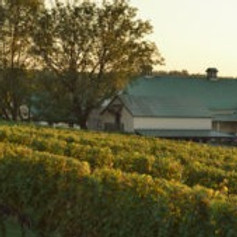 Opera in October at Boordy Vineyards
