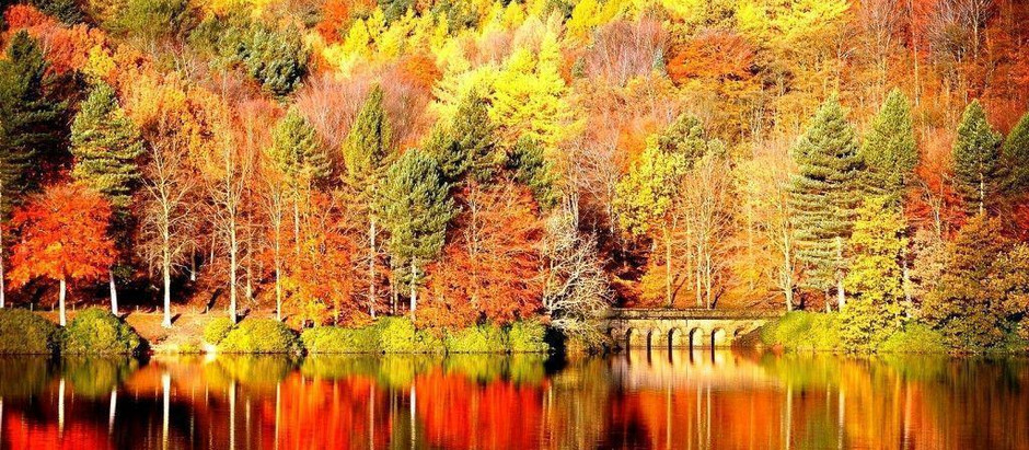 Glorious, Golden Fall is here...