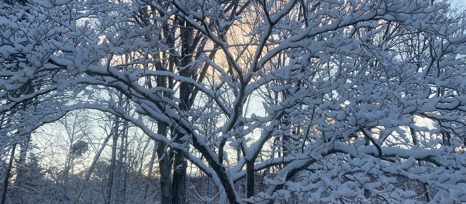 A Beautiful White Christmas Morning