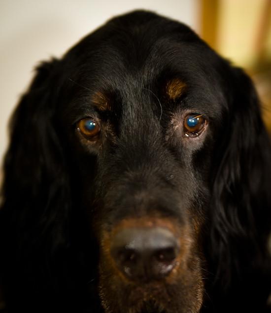 Doggies-039.jpg
