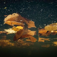 Fallen Foliage_#underwater #foliage.jpg