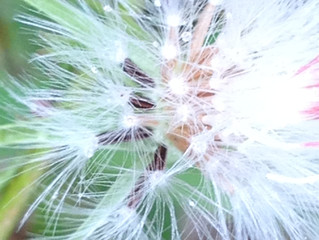 A Great Pioneer of Modern Spiritualism: Emma Hardinge Britten