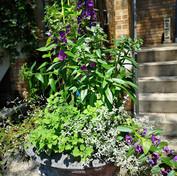 Pollinator planter