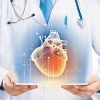 Кардиолог, УЗИ сердца, ЭКГ