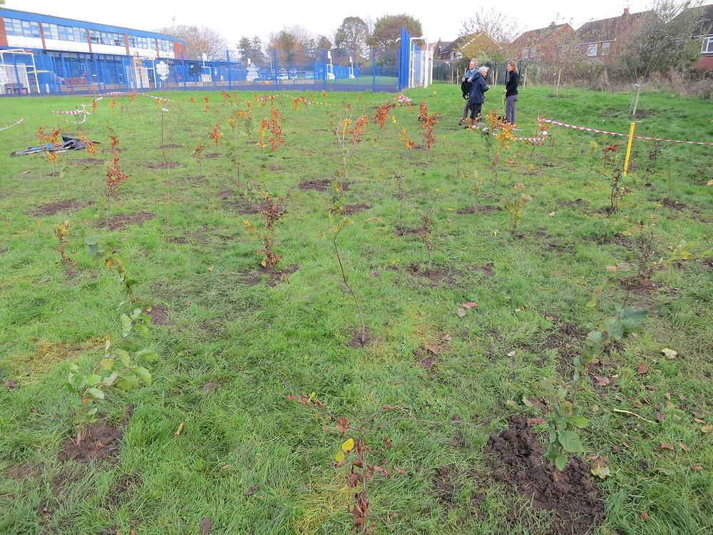 Travnik na šolskem igrišču Green Lane Community Special School v Angliji med sadnjo dreves in potem. Skupaj z učitelji, učenci in gozdarji smo posadili več kot 140 dreves.