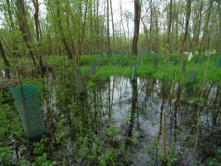 Obnova in nega gozda: Pot do zdravja in dobrega počutja