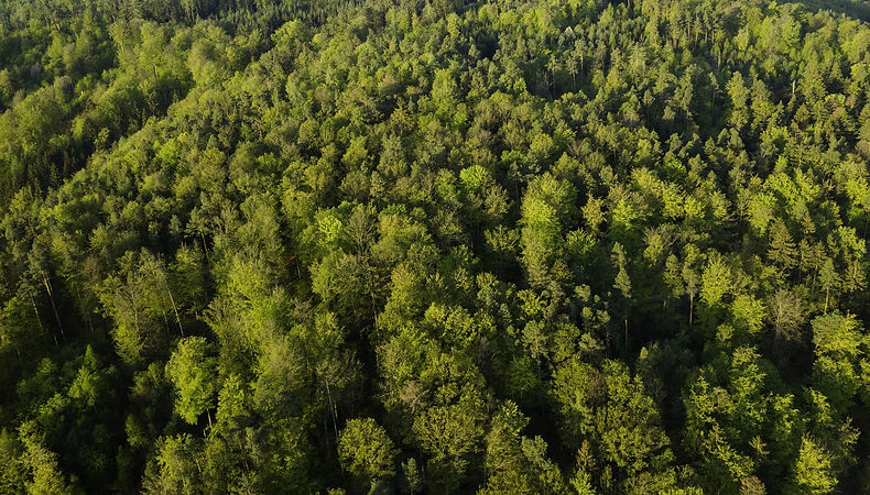 trees forest aerial view above