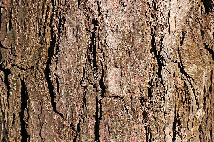 bark-1548824_1920.jpg