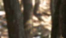 bark-652213_edited_edited_edited_edited.