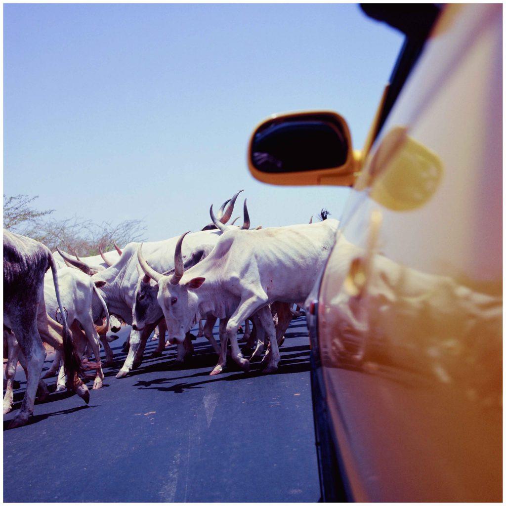 AFRICA CALLING3.jpg