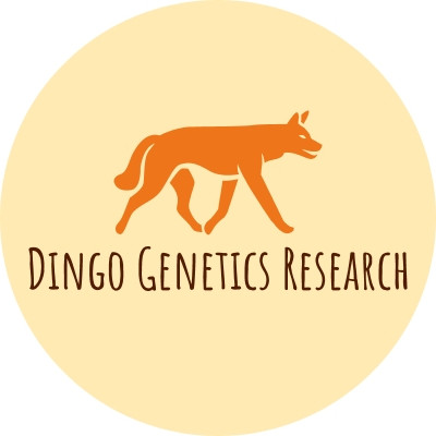 OUR DINGO PROJECT IS NOW STARTING TO COLLECT SAMPLES – ARE YOU INTERESTED?