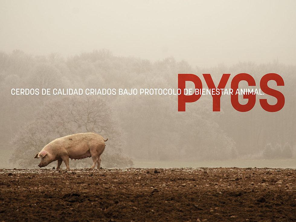 pygs_presentacion_look&feel-05.jpg