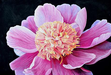 Pink Peoni by Krister Killinger