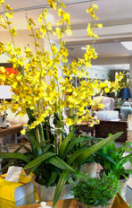 Yellow Silk Orchid