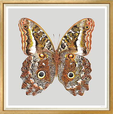 Butterfly Painting - Orange