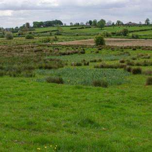 Pasture & Grasslands