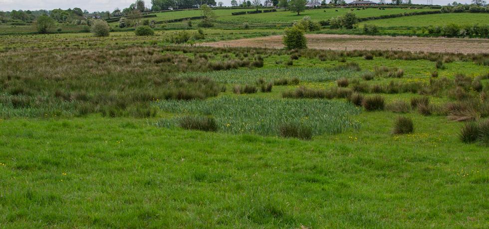 See Pasture & Grasslands