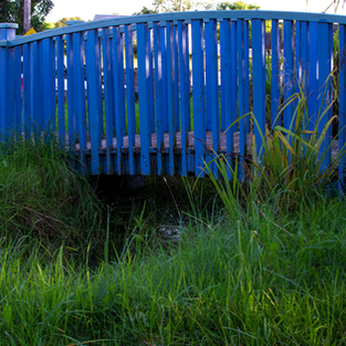See Biodiversity Garden - Bridge & Pond