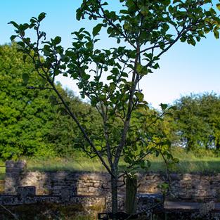Biodiversity Garden - Trees