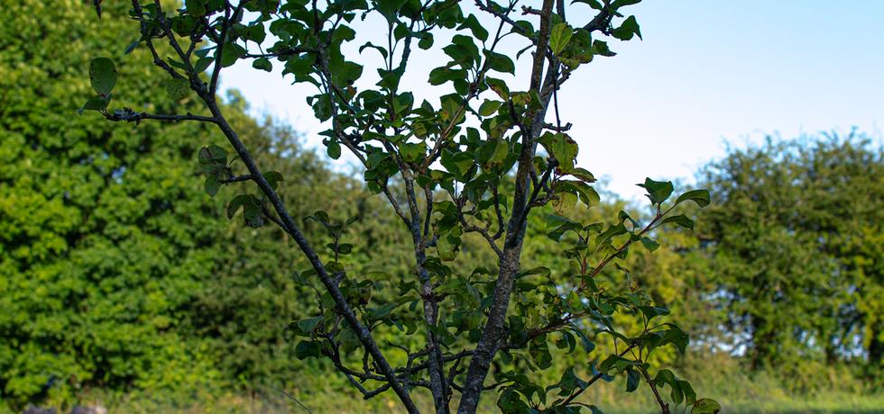 See Biodiversity Garden - Trees