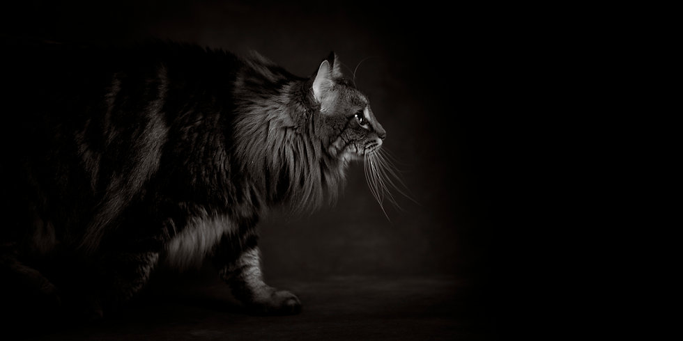 Janimalia-Cougar-0545.jpg